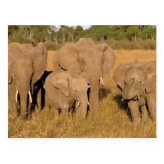 Cartão Postal África, Kenya, Masai Mara. Elefante africano