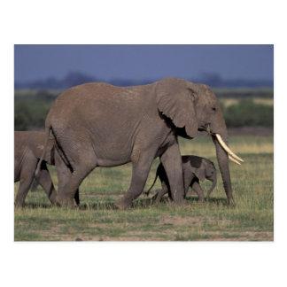 Cartão Postal África, Kenya, parque nacional de Amboseli.