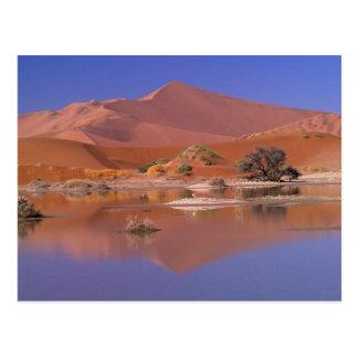 Cartão Postal África, Namíbia. Parque de Namib-Naukluft. 2