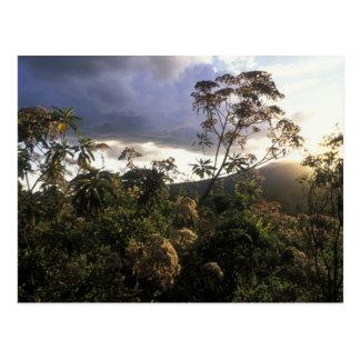 Cartão Postal África, Tanzânia, área da conservação de