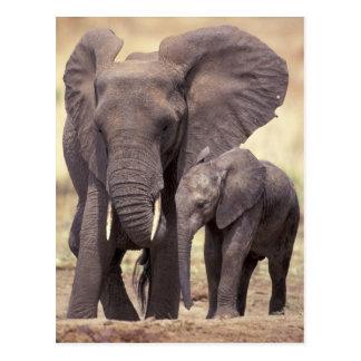 Cartão Postal África, Tanzânia, parque nacional de Tarangire. 2