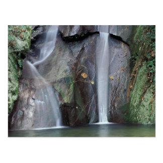 Cartão Postal África, Uganda, floresta húmida impenetrável de