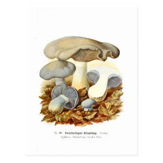 Cartão Postal Agaricus bicolor
