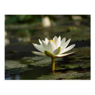 Cartão Postal Água branca bonita que emerge de uma lagoa