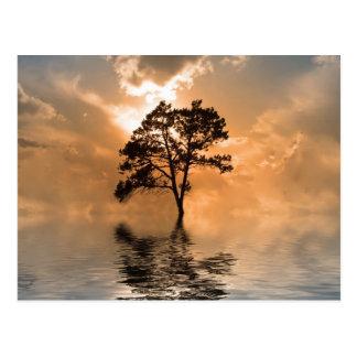 Cartão Postal Água e por do sol da árvore