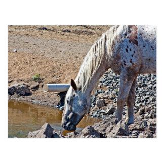 Cartão Postal Água potável do cavalo no litoral