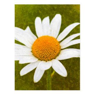 Cartão Postal Aguarela da camomila