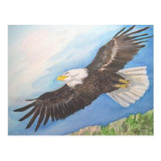 Cartão Postal Águia americana crescente