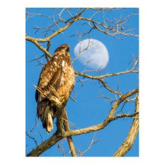 Cartão Postal Águia americana juvenil e a lua