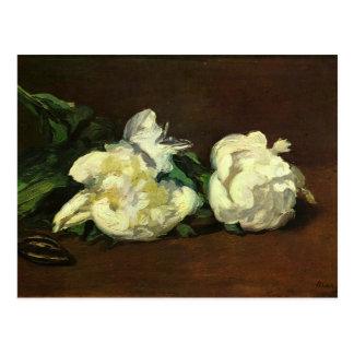 Cartão Postal Ainda vida, peônias brancas - Edouard Manet