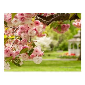 Cartão Postal Ajardinar perfeito com a árvore de cereja de