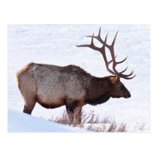 Cartão Postal Alces de Bull