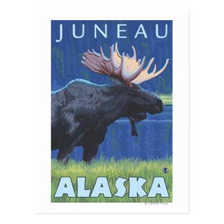 Cartão Postal Alces na noite - Juneau, Alaska