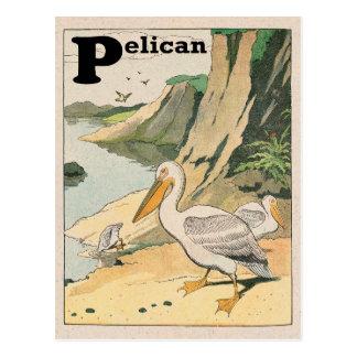 Cartão Postal Alfabeto do pelicano