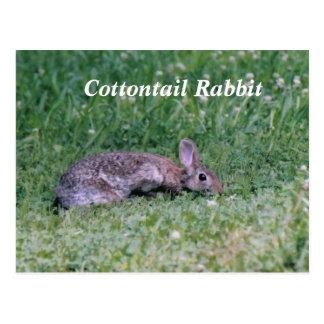 Cartão Postal Algodão congelado, coelho de coelho