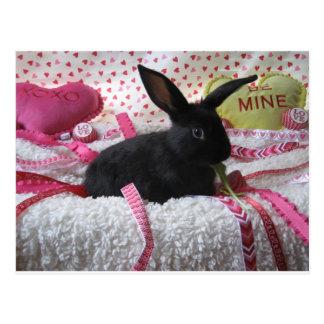 Cartão Postal Algum coelho ama-o!