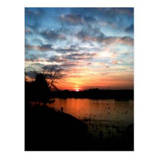 Cartão Postal Alimentação do por do sol e do pássaro de Rhine