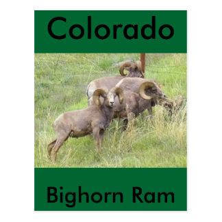 Cartão Postal Alimentação dos carneiros do Big Horn