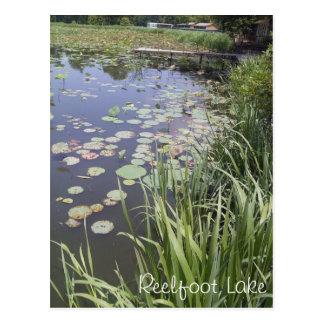 Cartão Postal Almofadas de lírio no lago Reelfoot