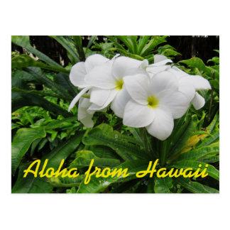 Cartão Postal Aloha flor tropical do Plumeria branco de Havaí