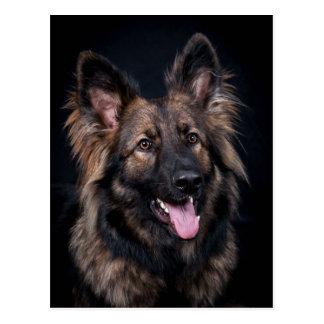 Cartão Postal Alsatian bonito do cão de german shepherd do