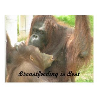 Cartão Postal Amamentação do orangotango