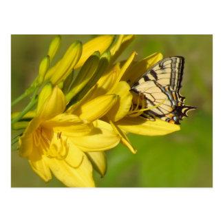 Cartão Postal Amante do lírio - borboleta