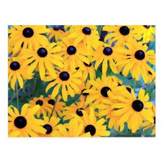 Cartão Postal Amarelo das flores de Susan de olhos pretos dentro