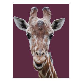 Cartão Postal ameixa do entalhe do girafa