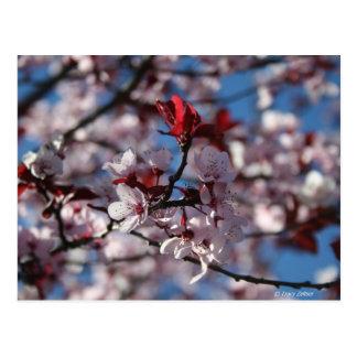 Cartão Postal ameixa Roxo-com folhas