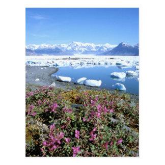 Cartão Postal America do Norte, EUA, Alaska, príncipe William