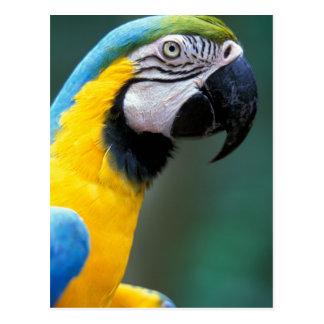 Cartão Postal Ámérica do Sul, Brasil, parque de Iguacu Natioanl,