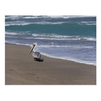 Cartão Postal Amigos da praia do pelicano