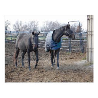 Cartão Postal Amigos do cavalo de fazenda do celeiro