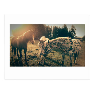 Cartão Postal Amigos em estradas rurais