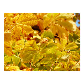 Cartão Postal Amor amarelo da cor do outono