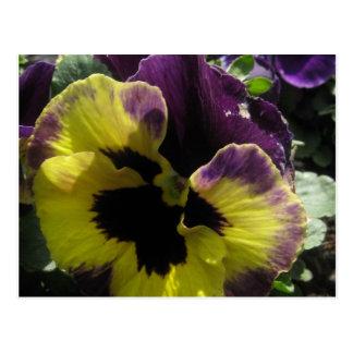 Cartão Postal Amor perfeito do primavera