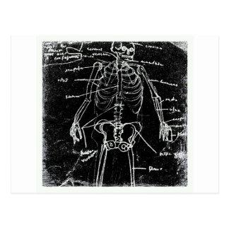 Cartão Postal anatomia de esqueleto humana de tokyo do yaie