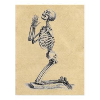 Cartão Postal Anatomia do Sepia dos ossos
