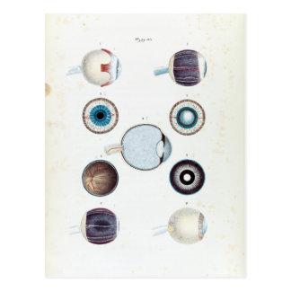 Cartão Postal Anatomia do vintage do olho humano