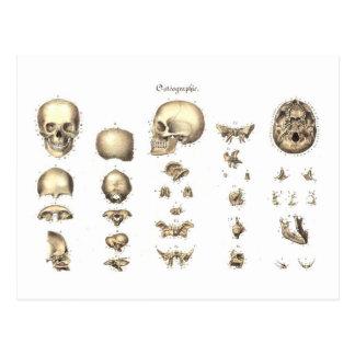 Cartão Postal Anatomia metódica do crânio