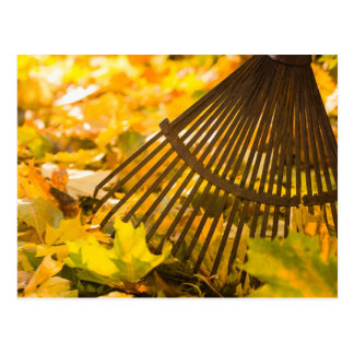Cartão Postal Ancinho e folhas