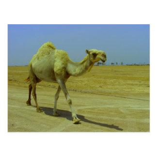 Cartão Postal Andando o longo caminho - camelo na ilha de