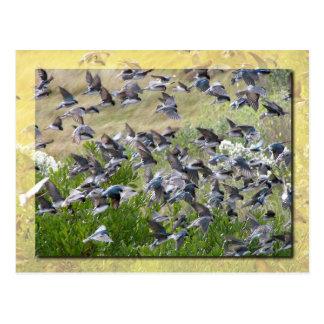 Cartão Postal Andorinhas de árvore, ilha de Assateague
