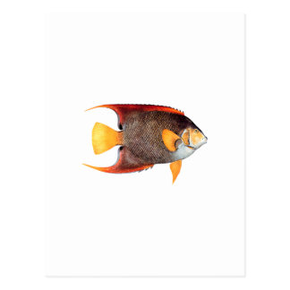 Cartão Postal Angelfish azul (água salgada)