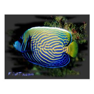 Cartão Postal Angelfish de Emporer
