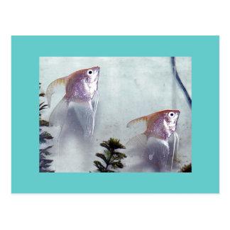 Cartão Postal Angelfish de prata da pérola
