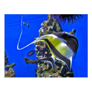 Cartão Postal Angelfish no aquário