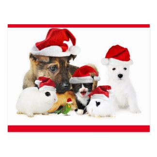 Cartão Postal Animais