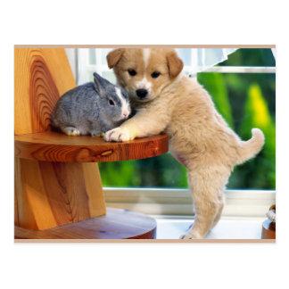 Cartão Postal Animais bonitos